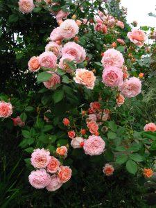 garden29may050191000
